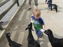 Feeding the Goats at Deanna Rose (1)