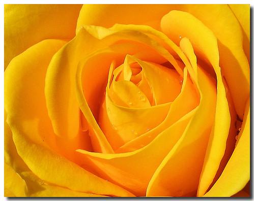 For you / Para vosotras (Sant Jordi)