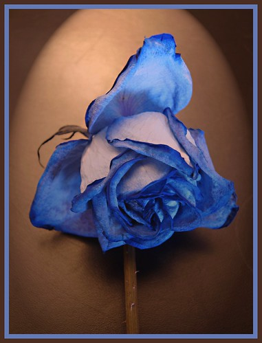 mavi gül - blue rose by Rana___.