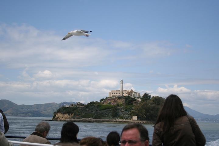 475197208 518f9882f6 o seagull