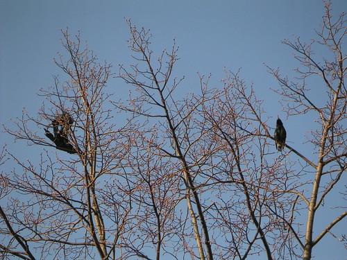 Bag&Crow