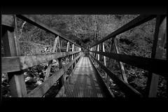 Narrow path (kishore_maringanti) Tags: uk nature canon yorkshire northyorkshire dales yorkshiredales challengeyouwinner krishlikesit