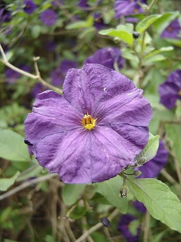 flower in our garden