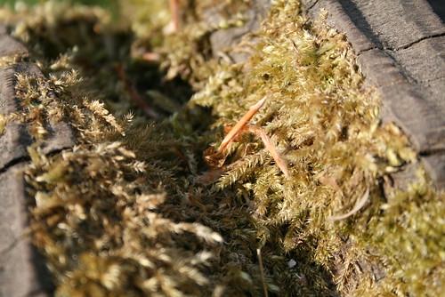 sculpture moss sphagnum sphaigne