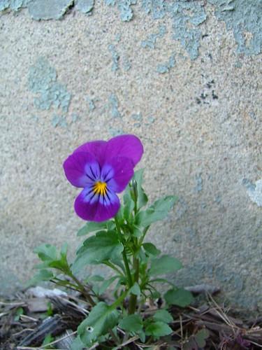 Random Viola 050607