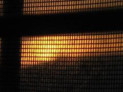Sunrise viewed through screen (peggyhr) Tags: orange tree yellow sunrise gold edmonton rooflines