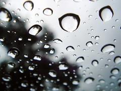 Rain / Tree