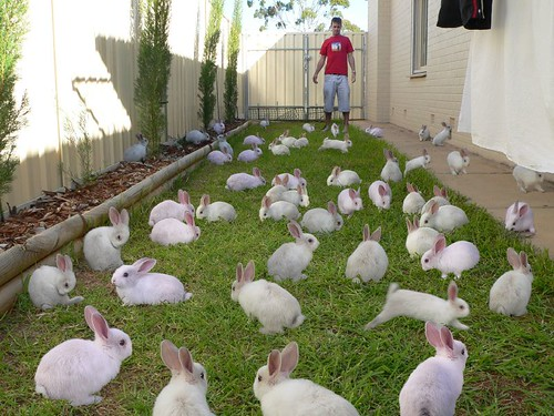 Cloning bunnies in the backyard
