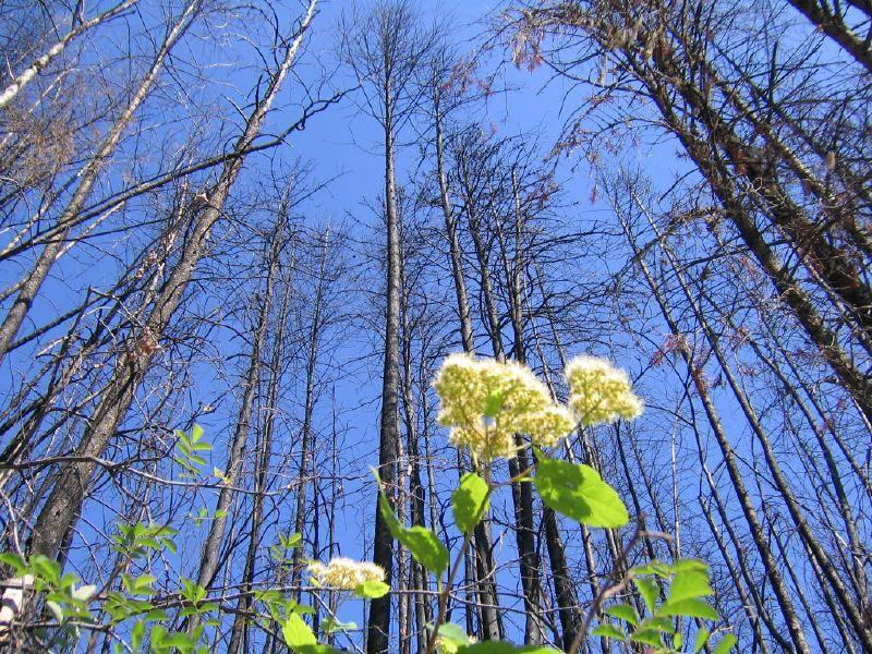 Glacier Flower
