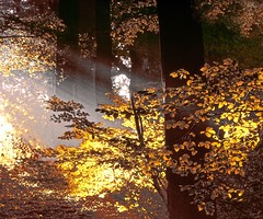 Sunrays in autumn (!.Keesssss.!) Tags: morning autumn tree nature netherlands horizontal forest outdoors photography day branch nopeople growth sunbeam freshness gettyimages royaltyfree beautyinnature theflickrcollection keessmans 0050ksgetty