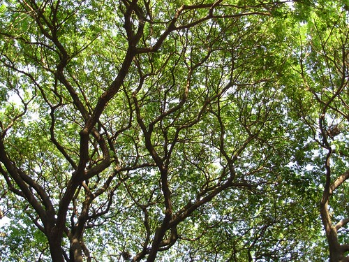 Nature's own Canopy