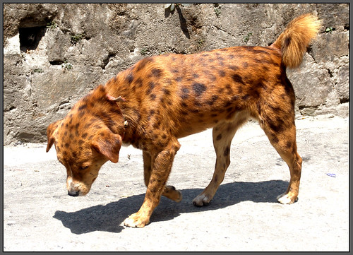 Black And Brown Spotted Dog