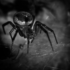 Survivor (Mikel Belza Guede) Tags: bw bug insect spider lomo bn araa nicho insecto telaraa ltytr1