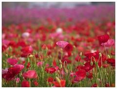 Flowers 070523 #04