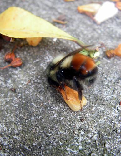 bee finding pollen