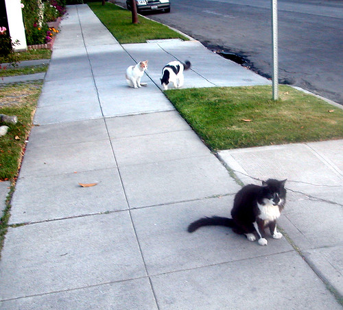 Cats in Toluca Lake.