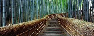 bamboogie
