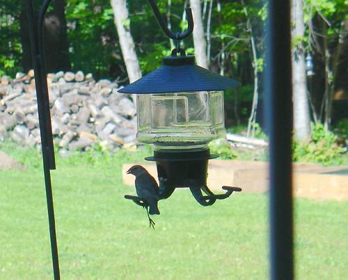 My Friend Fred - At the bird feeder