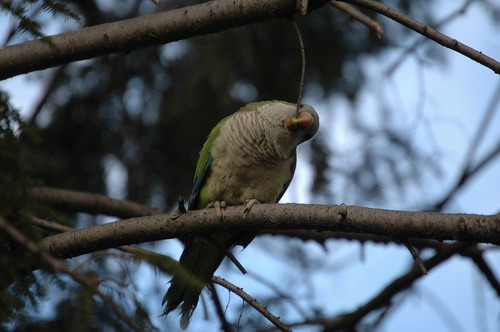Parrots Two