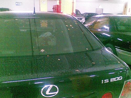 車上都是榕樹果子漿