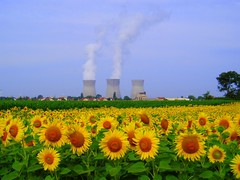 Sunflowers and nuclear power