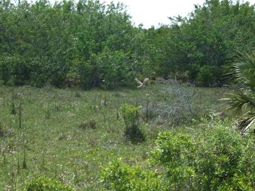 Everglades Study 259