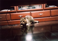 This cat aims at game. 2 (thezephyrsong_tzs) Tags: cat natura fujifilm iso1600 classica naturaclassica