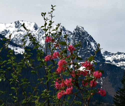 Mt. Index and Red Currant Bush