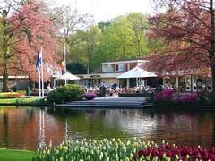 Keukenhof flower park #7