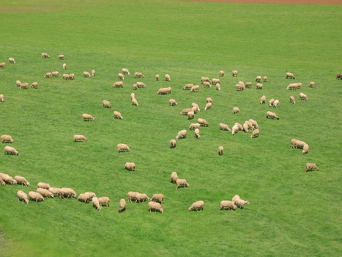 Ovelles de la Garrotxa
