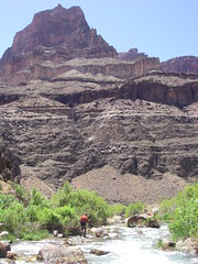 Grand Canyon - Lower Tapeats Creek fly-fishing (Al_HikesAZ) Tags: park camping arizona creek landscape ilovenature fishing hiking quote grandcanyon grand canyon hike national backpacking backpack backcountry flyfishing trout hikes inthecanyon grandcanyonnationalpark coloradoplateau gcnp awesomenature thunderriver outdoorbeauty unature tapeats alhikesaz belowtherim
