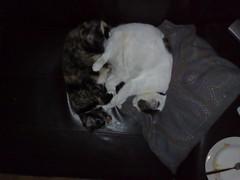 08052007036.jpg (judey) Tags: cat twinkle pixel