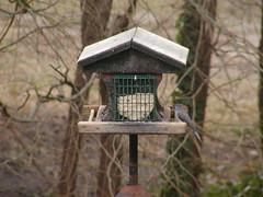 titmouse_good_3 (CapeCodAlan) Tags: birdseed titmouse ebirdseed capecodalan