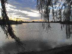 Salix Babylonica y Lago (misarajevo) Tags: lago atardecer sauce entrerios salix llorn villaelisa babylonica