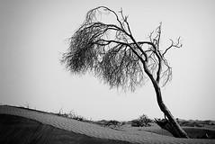Swept (mark brown dxbphoto) Tags: sky tree canon sand dubai desert dunes uae remote uaephotographer dubaiphotos dubaiphotographer dubaiprofessionalphotographer uaeprofessionalphotographer