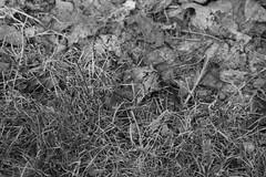 An artsy-fartsy ground in B/W. (photo-russ) Tags: canon d400 digitalrebelxti