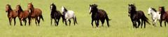 Cruelty Rescue Horses - by dbarronoss