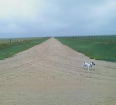 Castaway? (tnsunflowermom) Tags: road dog fence castaway vanishingpoint long alone dirt solo lonely solitary desolate openrange