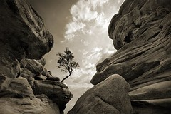 Against all odds (jasontheaker) Tags: uk tree texture water sepia spring sandstone rocks yorkshire accepted1of100 nidderdale formations upcoming eroded glaciation landscapephotography jasontheaker upcoming:event=183061 brimhamrocks pprowinner
