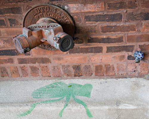 Green Bug (Cicada)