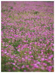 Flowers 070523 #07