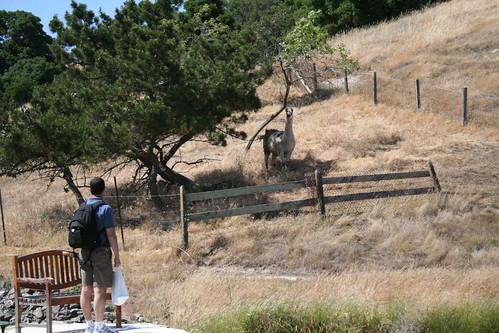 John and llama at nicholson ranch