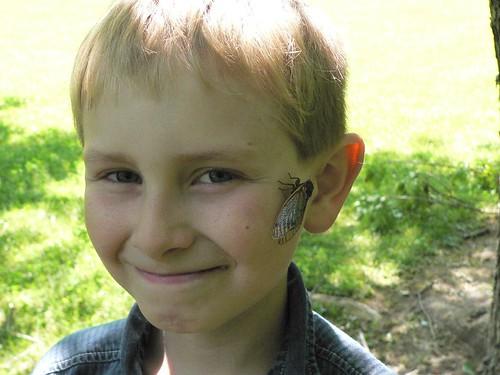 2007 Brood XIII Cicada