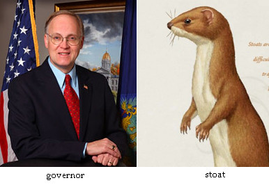governor, stoat