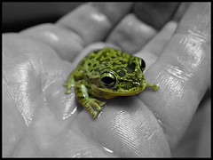 Tiny Frog (Scott Kinmartin) Tags: baby amphibian mini frog explore toad tiny winner greenfrog babyfrog supershot 15challengeswinner