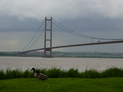 Humber Bridge Ducks (howsthat) Tags: cameraphone barcelona china california africa birthday christmas city uk bridge family flowers blue camping friends england blackandwhite bw food dog baby chicago canada black france flower color berlin cute bird art film beach church car amsterdam animals festival boston architecture clouds cat canon river garden de geotagged fun dance concert europe day florida unitedkingdom band ducks australia estuary april hull humberbridge eastyorkshire humberside howsthat