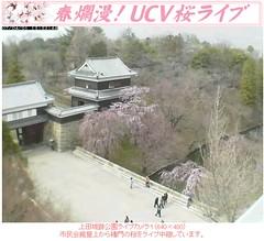 櫻花一分開! 20070401上田城跡公園