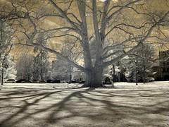 Treedow - by zachstern