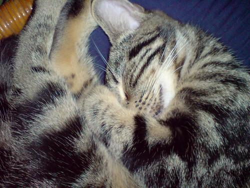 睡到微笑的VIVI