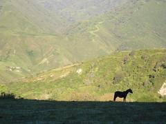 Caballo solitario